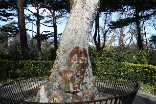 Fitroy Gardens Fairy Tree