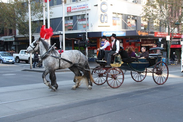 Melbourne city Horse and Carriage rides